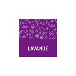 Bio Lavendel aus der Provence