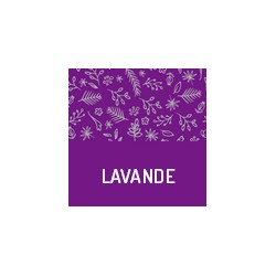 Organic lavender from France